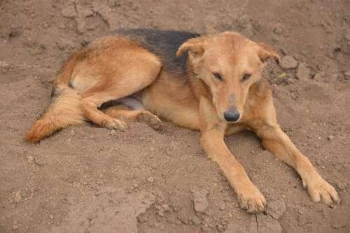 Dog Lazy Country Sleepy Pet Canine Lying