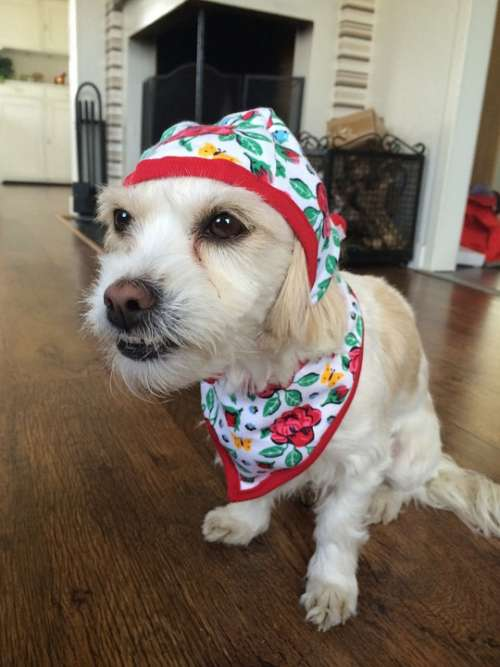 Dog Funny Dog Dog In Clothes Surprised Dog Pets