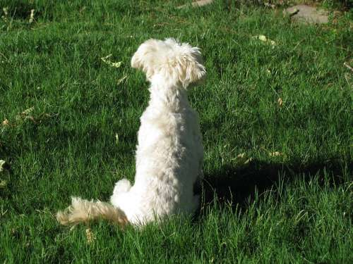 Dog Pondering Meditation