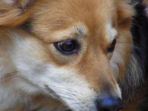 Dog Ronni Ronja Animal Eyes