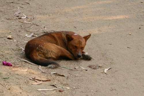 Dog Seating Dog Sleeping Dog Asad Dhaka Bangladesh