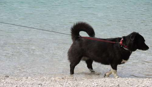 Dog Black Leash Lake Beach Mountains Animal