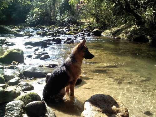 Dog Water Rio