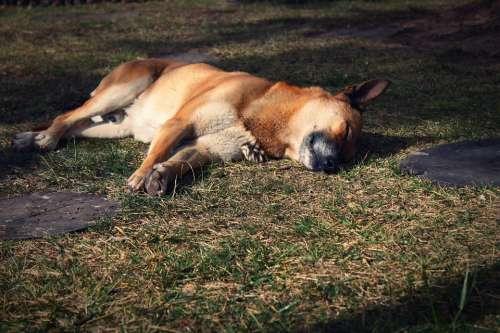 Dog Rest Siesta Sleeping Sleep Animals Naps Pet