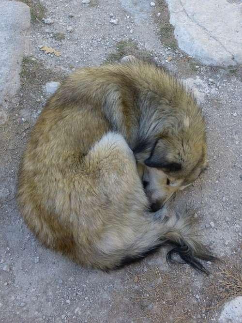 Dog Sleep Rest Animal