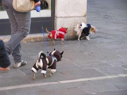 Dog Hund Dog Walking Kutyadivat