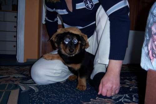 Dog Animal Race Puppies Cute Pet Mammal Saucool