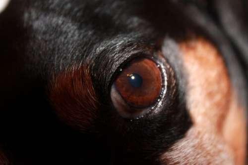 Dog Eye Dog Eye Brown Animal Close Up Pet
