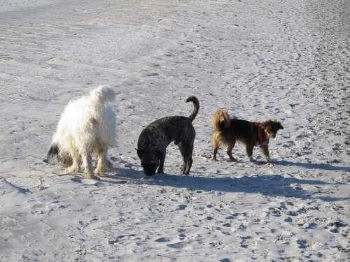 Dogs Beach Friends Team Summer Vacations Buddy