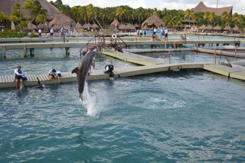 Dolphin Water Jump Xcaret