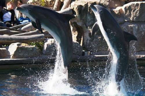 Dolphins Animals Nature