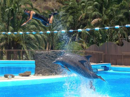 Dolphins Show Water Flying Animal Stunt Action