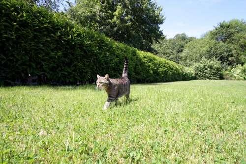 Domestic Cat Cat Garden Hunt