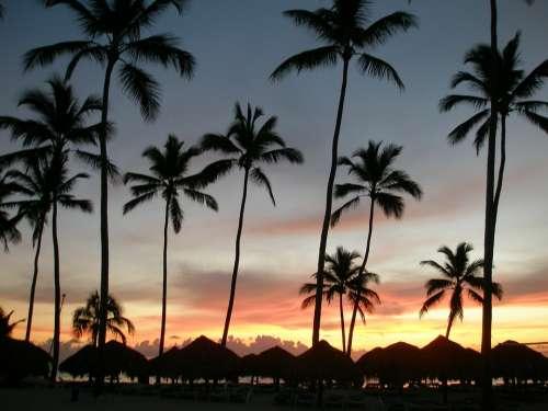 Dominican Republic Beach Sunrise Sea Palm