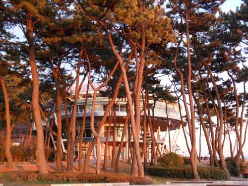 Dongbaek Island Nuri Flooring Glow Wood