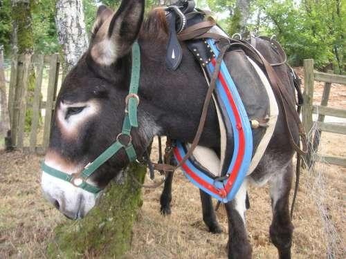 Donkey Animal Ass Mule Collar Working Animal