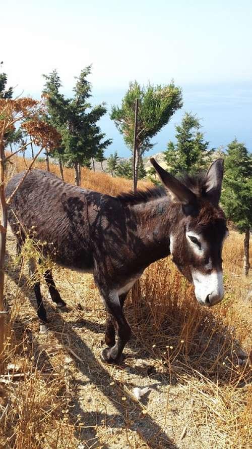 Donkey Greece Last Animal