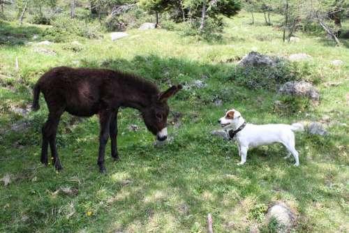 Donkey Animal Mammal Rural Italy