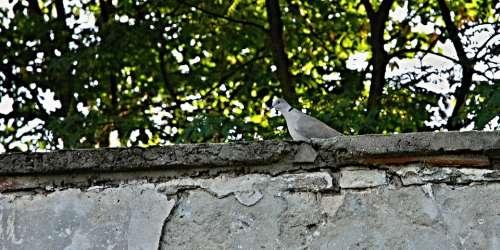 Dove Wall Park Trees Grey