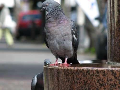 Dove Bird Animal World Animals