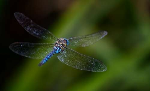 Dragonfly Fly Background Blurred Blue Wings
