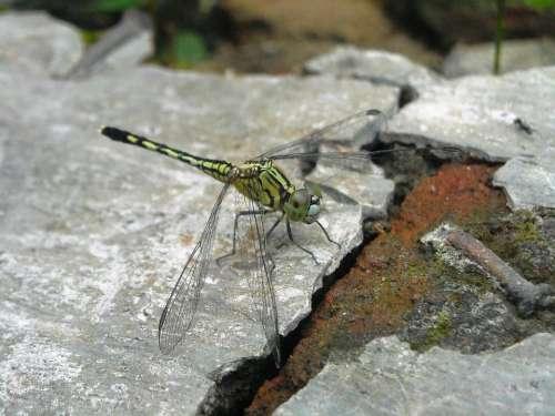 Dragonfly Green Hiitam Floor Cement Brick