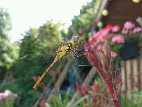 Dragonfly Summer Bug Wings Garden