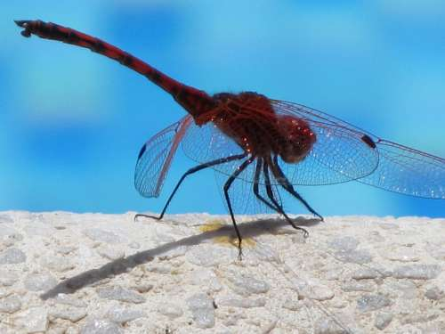 Dragonfly Insect Close Up Water Flight Insect