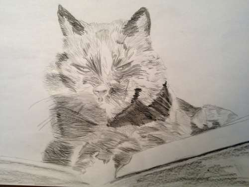 Drawing Pencil Cat
