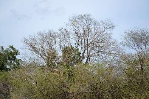 Dried Trees Dry Sky Forest Sri Lanka Mawanella