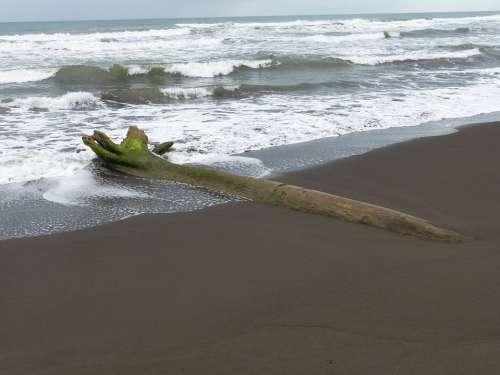 Drift Wood Beach Sand Sea Water Wave Sand Beach