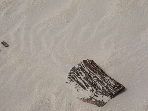 Drift Wood Sand Pattern Beach Sand Ripples