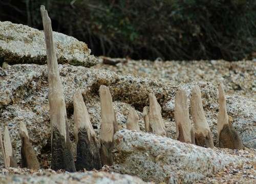 Driftwood Beach Shore Timber Sea Coast Art Wood