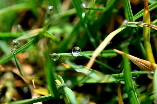 Drop Water Grass Macro Rain Nature Background