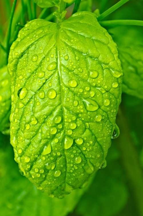 Drops Water Macro Leaf Leaves Nature Rain