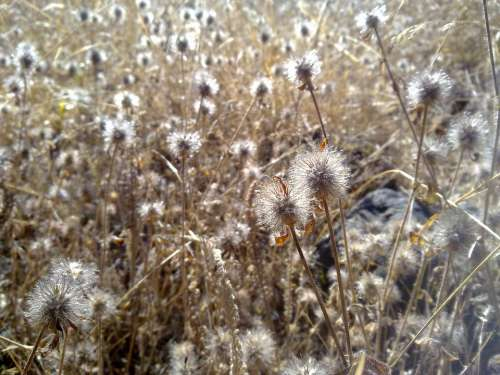 Dry Grass Weeds Field Summer Seed Autumn Yellow