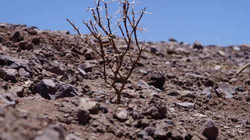 Dry Landscape Dry Tree