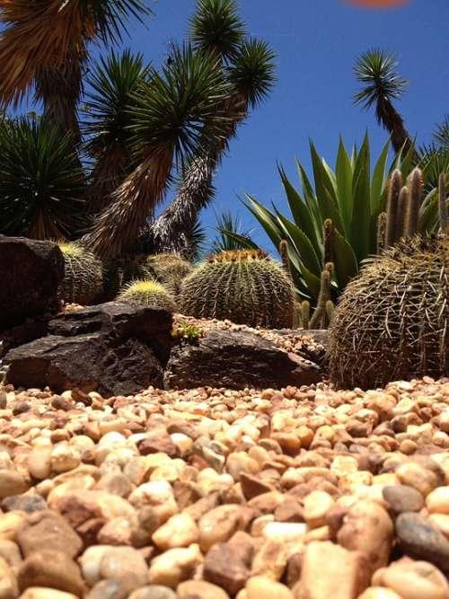 Dry Desert Yellow Environment Concept Cracked