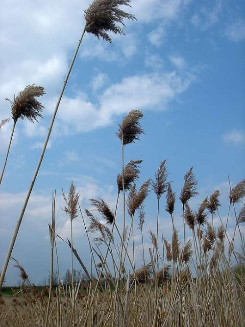 Dry Grass High Sky Wind Movement
