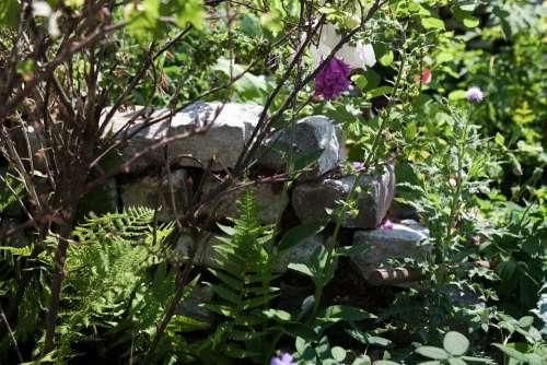 Dry Stone Wall Natural Garden Ferns Texture