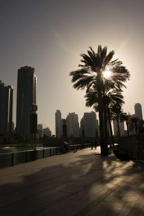 Dubai Palm Evening Sky Setting Sun Sun Sunset Uae