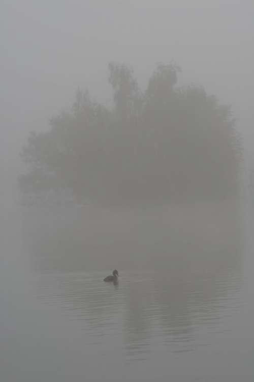 Duck Bird Water Fog Wings Feathers Island Shade