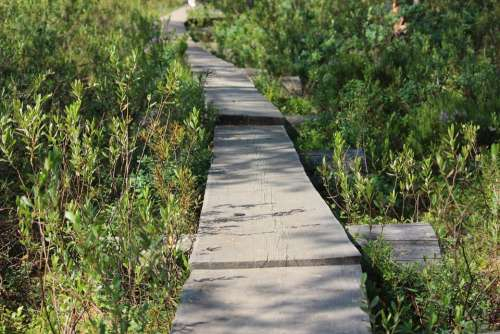 Duckboards The Path Forest Twig Twigs