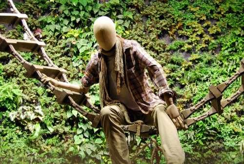 Dummy Scale Leaves Green Wood Showcase Steps