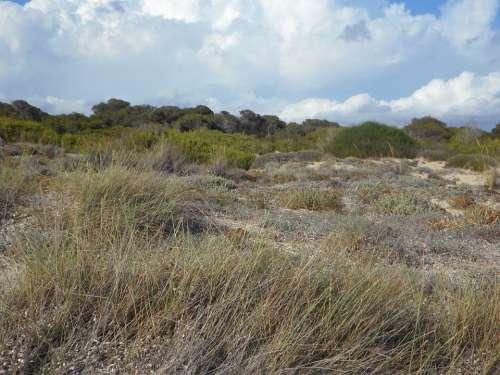 Dunes Dune Landscape Empty Fouling Sandy Rest
