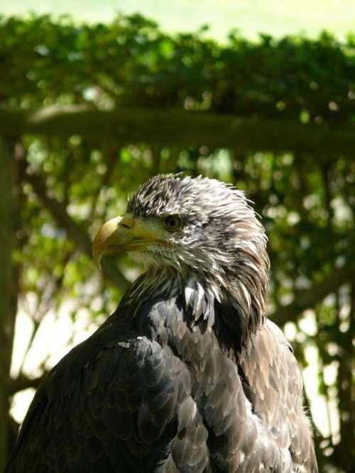 Eagle Birds Of Prey Bird Of Prey Ave Reservation