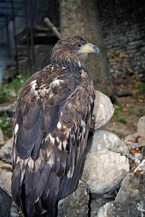 Eagle Bird Animal Symbol Freedom Symbolic Nature