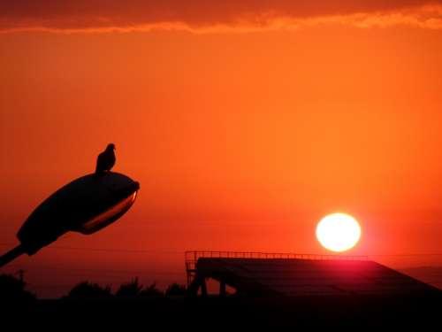 East Sun Lantern Birds Sky Twilight Red Pole