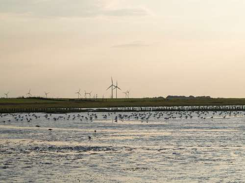 Ebb North Sea Wadden Sea Sea Water Nature Watts