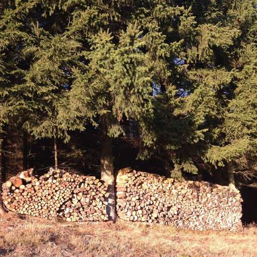Edge Of The Woods Pile Of Wood Autumn Tribe Nature